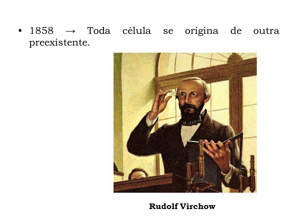 1858 Toda célula se origina de outra preexistente. Rudolf Virchow
