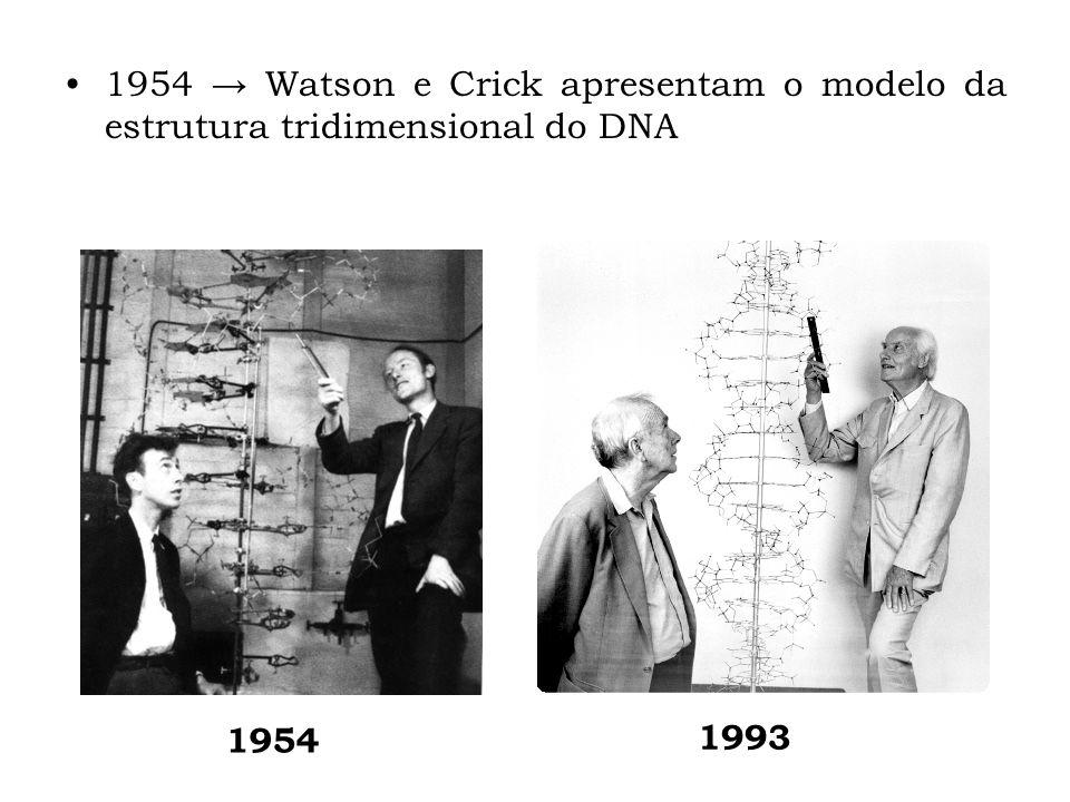 1954 Watson e Crick apresentam o modelo da estrutura tridimensional do DNA 1993 1954