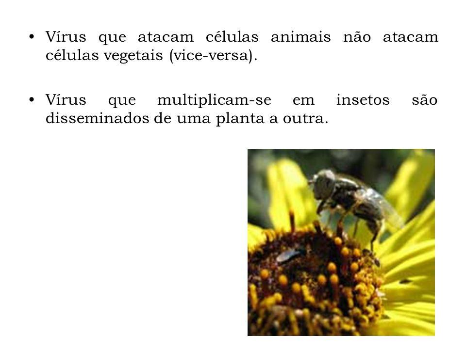Vírus que atacam células animais não atacam células vegetais (vice-versa). Vírus que multiplicam-se em insetos são disseminados de uma planta a outra.