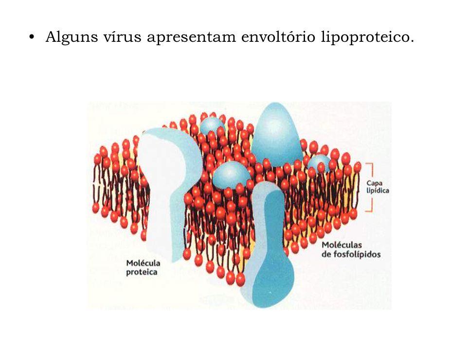 Alguns vírus apresentam envoltório lipoproteico.