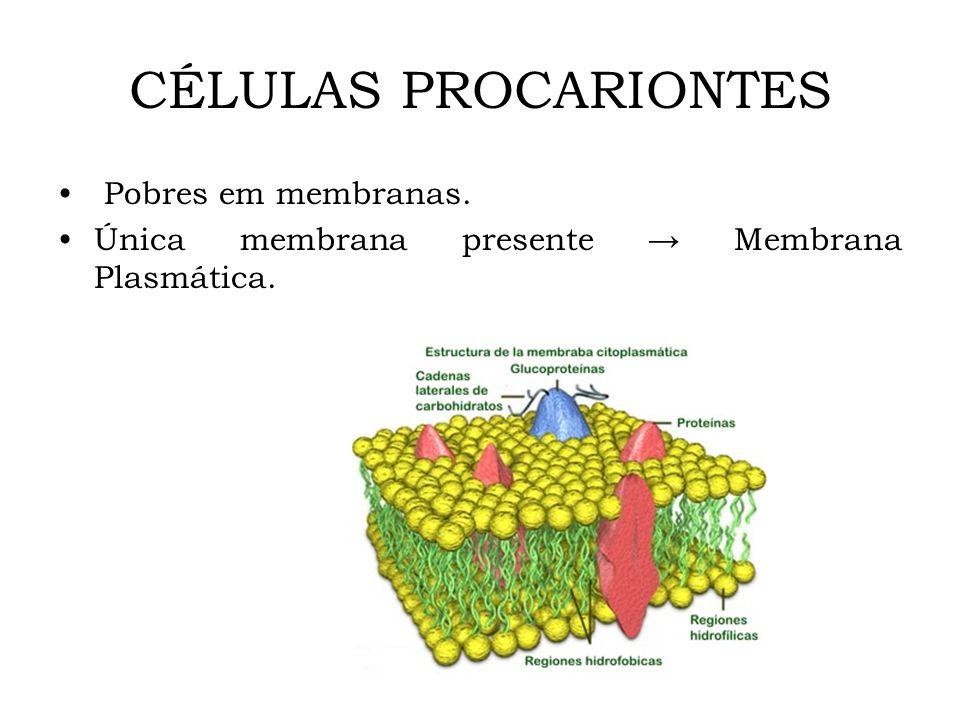 CÉLULAS PROCARIONTES Pobres em membranas. Única membrana presente Membrana Plasmática.