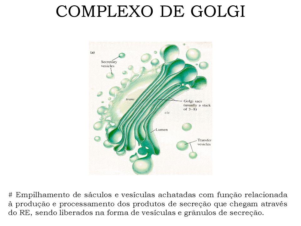 COMPLEXO DE GOLGI # Empilhamento de sáculos e vesículas achatadas com função relacionada à produção e processamento dos produtos de secreção que chega