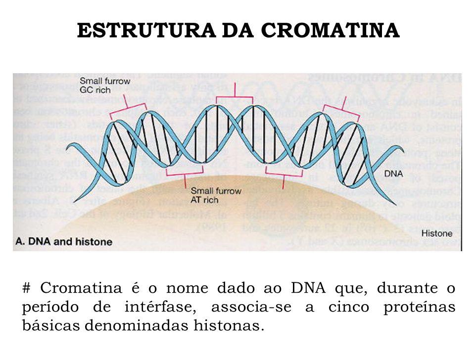 ESTRUTURA DA CROMATINA # Cromatina é o nome dado ao DNA que, durante o período de intérfase, associa-se a cinco proteínas básicas denominadas histonas