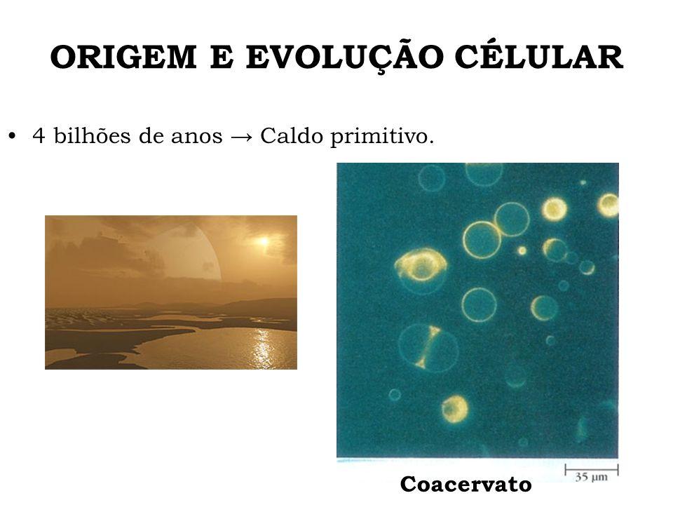 ORIGEM E EVOLUÇÃO CÉLULAR 4 bilhões de anos Caldo primitivo. Coacervato