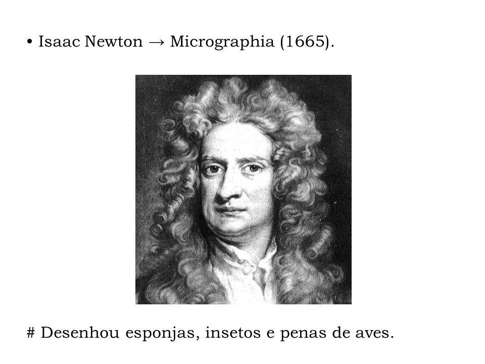 Isaac Newton Micrographia (1665). # Desenhou esponjas, insetos e penas de aves.