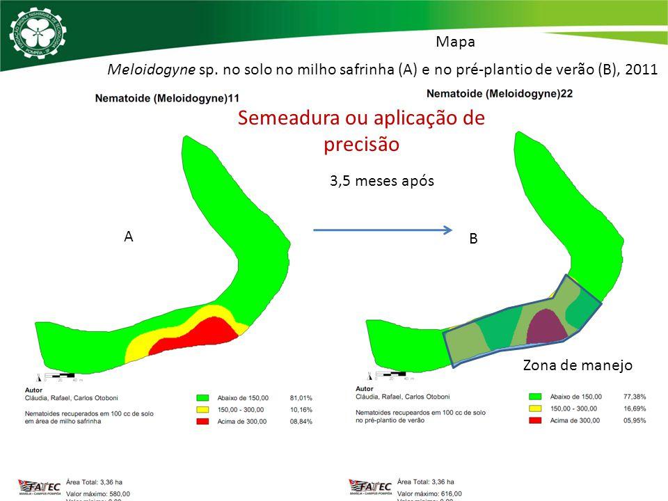 Meloidogyne sp. no solo no milho safrinha (A) e no pré-plantio de verão (B), 2011 A B 3,5 meses após Semeadura ou aplicação de precisão Zona de manejo
