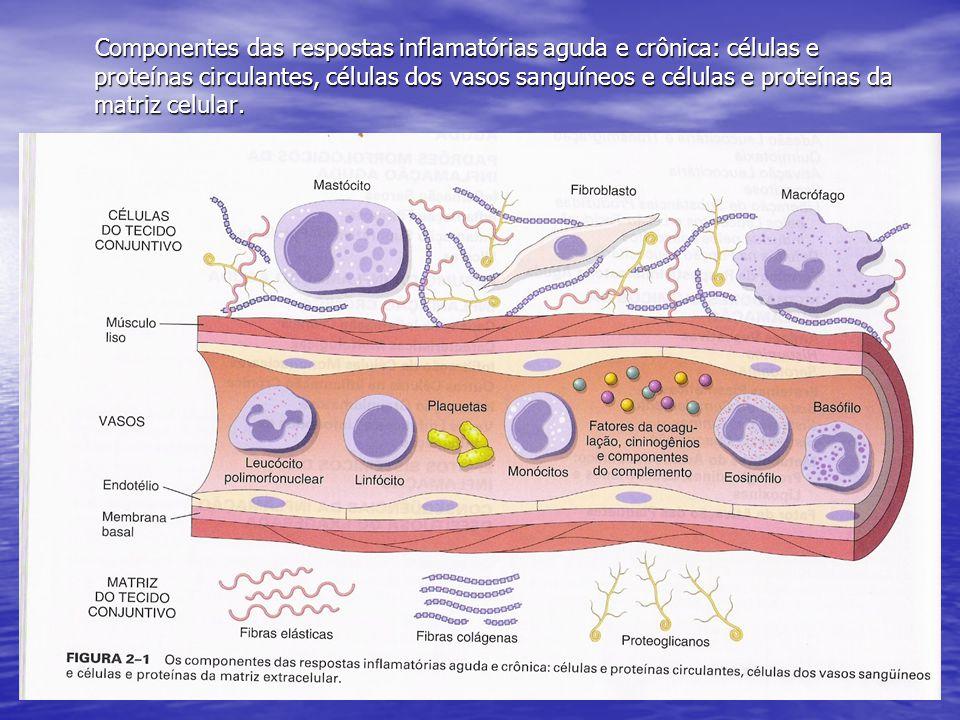 Componentes das respostas inflamatórias aguda e crônica: células e proteínas circulantes, células dos vasos sanguíneos e células e proteínas da matriz
