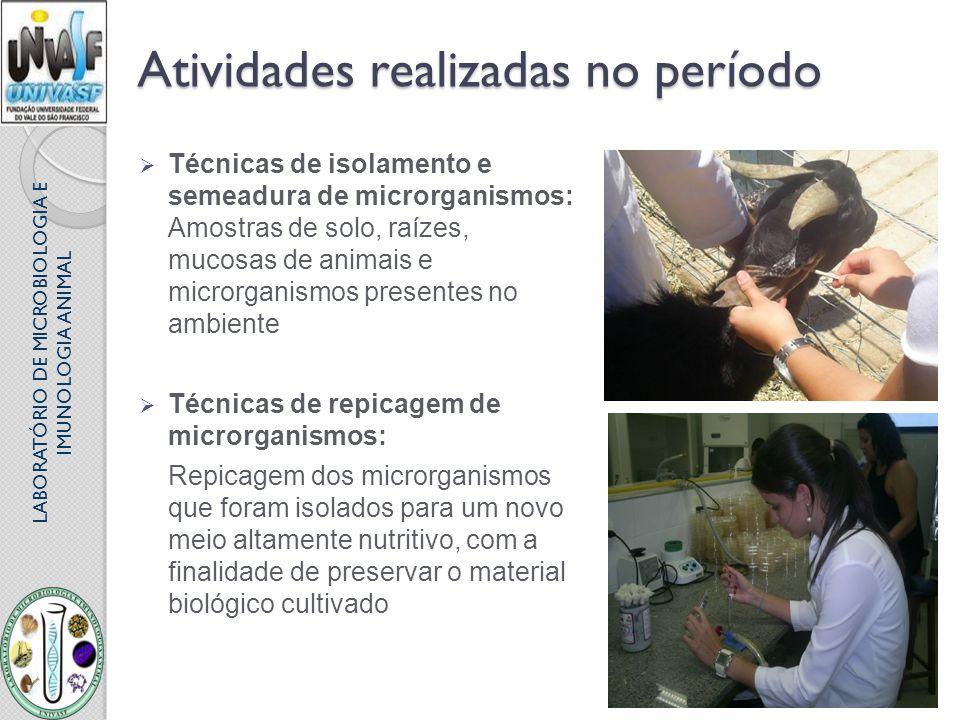LABORATÓRIO DE MICROBIOLOGIA E IMUNOLOGIA ANIMAL Atividades realizadas no período Técnicas de isolamento e semeadura de microrganismos: Amostras de so