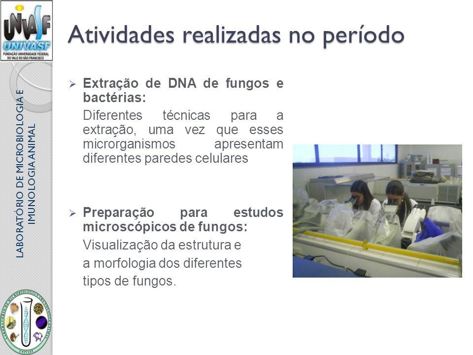 LABORATÓRIO DE MICROBIOLOGIA E IMUNOLOGIA ANIMAL Atividades realizadas no período Extração de DNA de fungos e bactérias: Diferentes técnicas para a ex