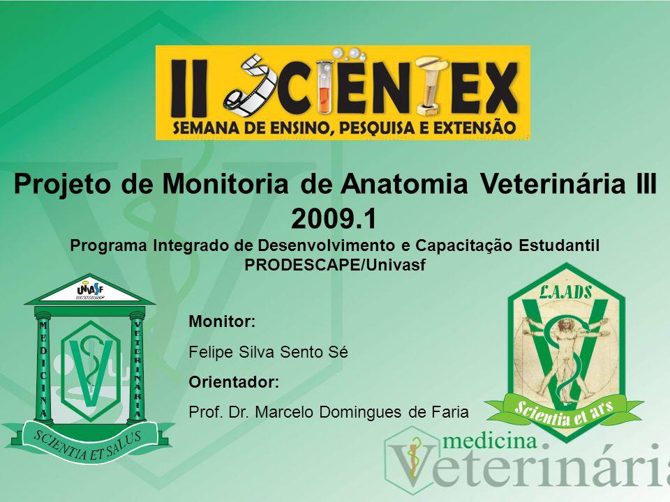 Monitor: Felipe Silva Sento Sé Orientador: Prof. Dr. Marcelo Domingues de Faria Projeto de Monitoria de Anatomia Veterinária III 2009.1 Programa Integ