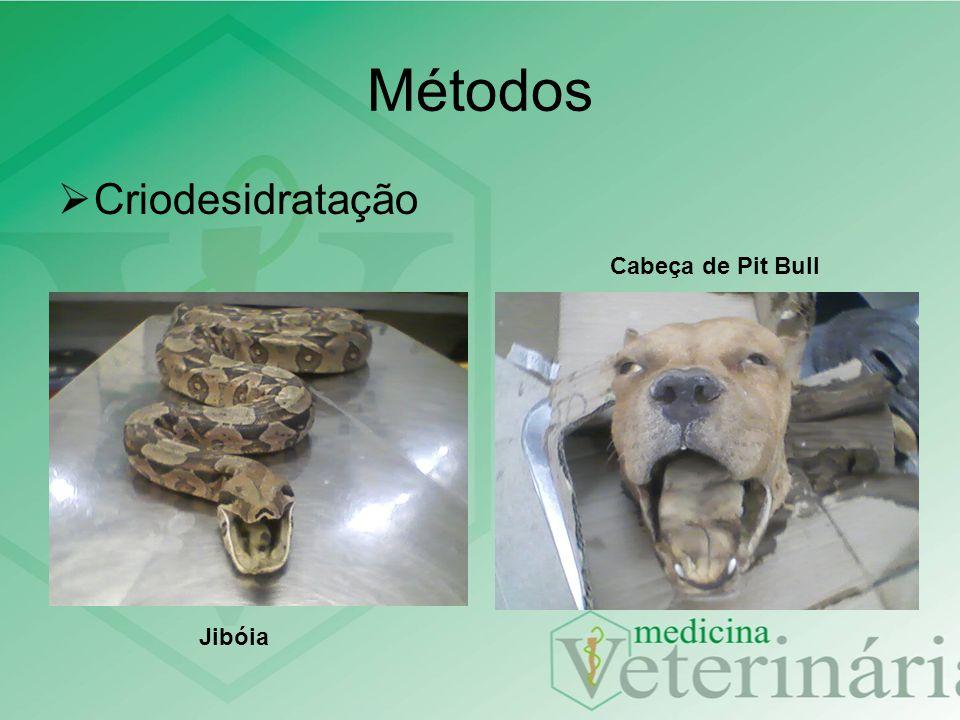 Métodos Criodesidratação Jibóia Cabeça de Pit Bull