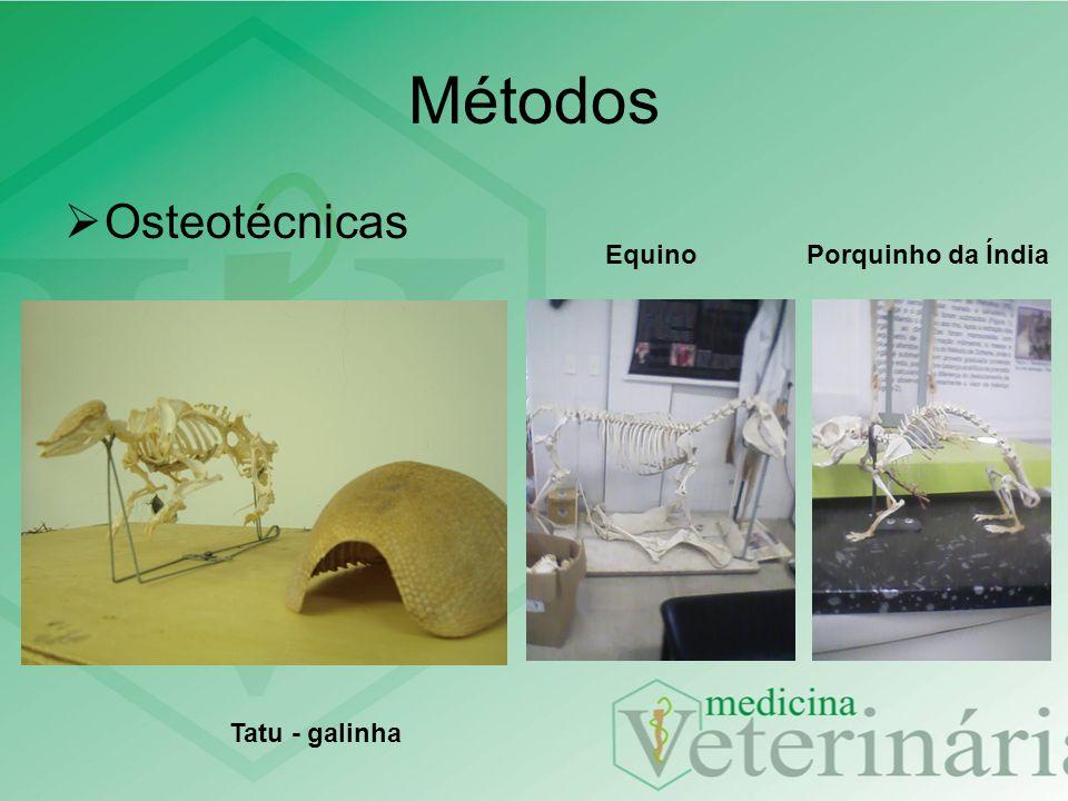 Osteotécnicas Métodos Tatu - galinha EquinoPorquinho da Índia
