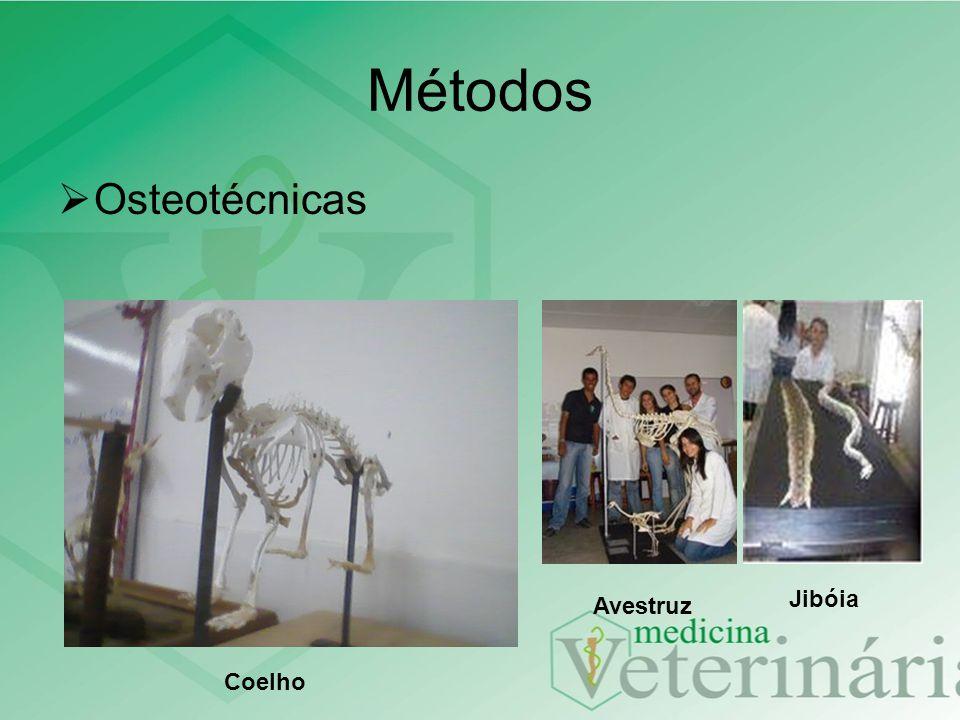 Métodos Osteotécnicas Coelho Avestruz Jibóia