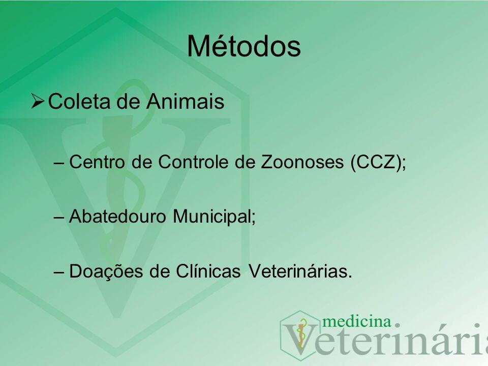 Métodos Plantões Anatomia Veterinária III –Segunda-feira: 13:30 às 17:00h –Quarta-feira: 07:00 às 12:00h –Sexta-feira: 13:30 às 17:00h –Carga horária: 12 h/semana
