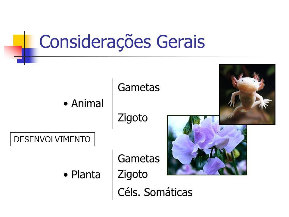 Considerações Gerais Animal Gametas Zigoto Planta Gametas Zigoto Céls. Somáticas DESENVOLVIMENTO