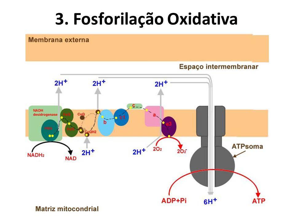 3. Fosforilação Oxidativa