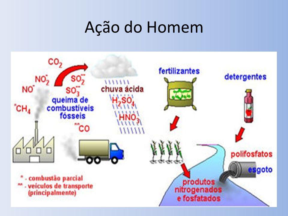Interferência Humana Fertilização do solo em alta escala – Desequilíbrio do ciclo – Problema facilmente resolvido com a rotação de culturas.