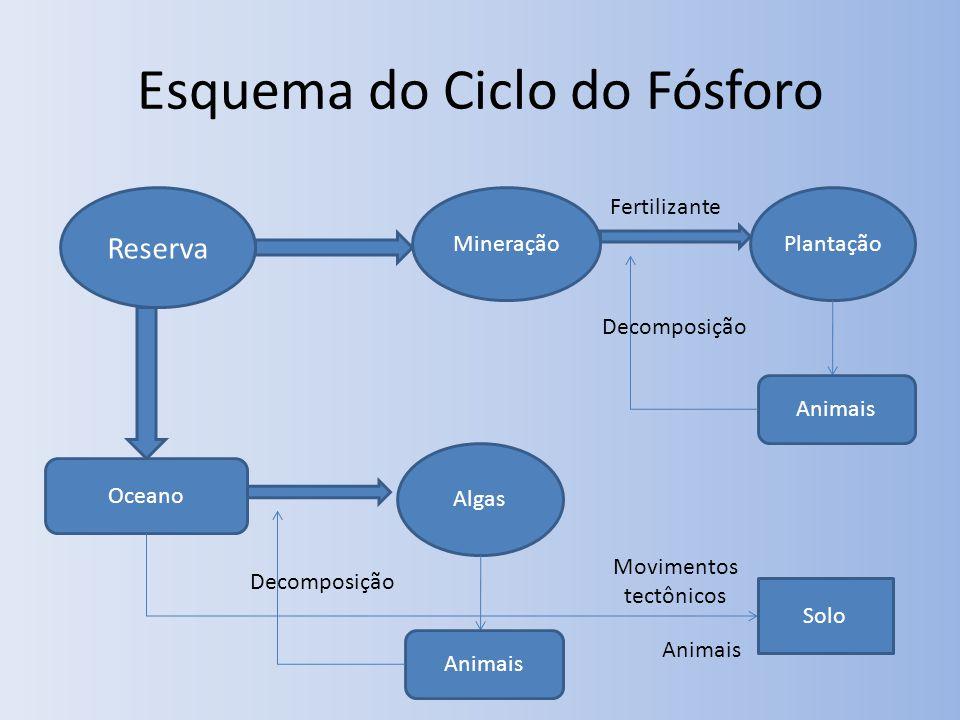 Esquema do Ciclo do Fósforo Reserva MineraçãoPlantação Fertilizante Animais Decomposição Oceano Algas Animais Decomposição Solo Movimentos tectônicos