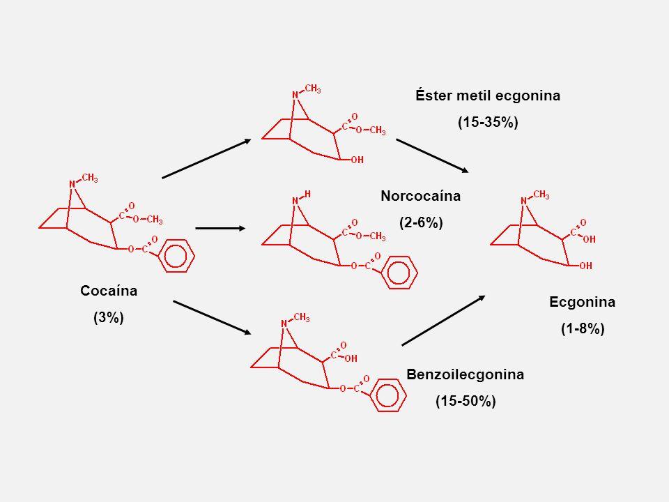 Cocaína (3%) Éster metil ecgonina (15-35%) Ecgonina (1-8%) Norcocaína (2-6%) Benzoilecgonina (15-50%)