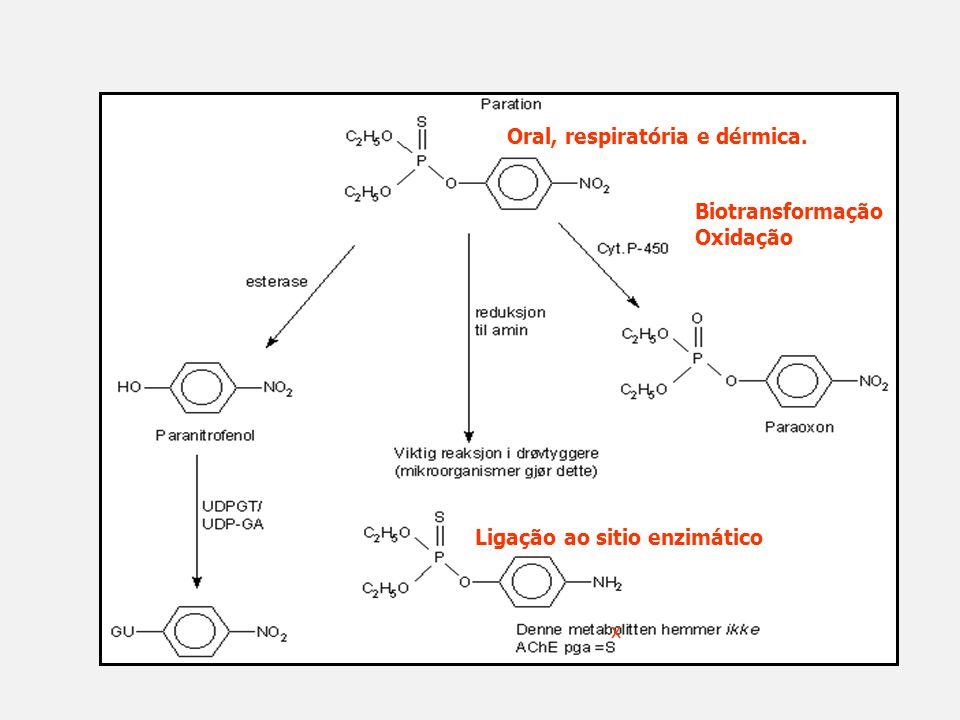 Oral, respiratória e dérmica. Biotransformação Oxidação Ligação ao sitio enzimático x