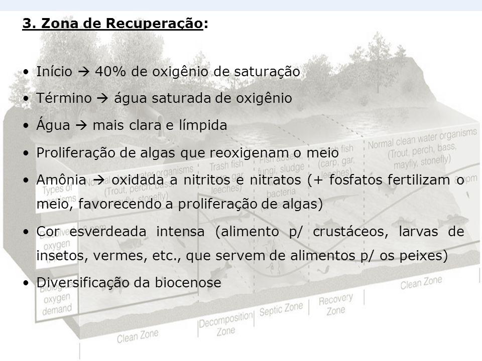 3. Zona de Recuperação: Início 40% de oxigênio de saturação Término água saturada de oxigênio Água mais clara e límpida Proliferação de algas que reox