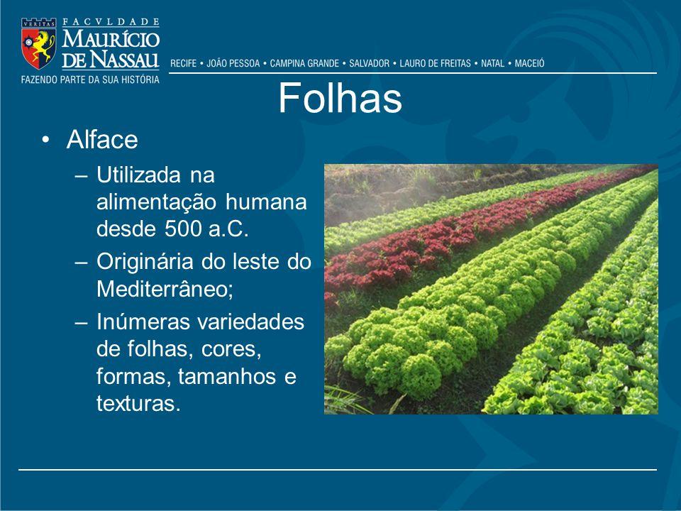 Folhas Alface –Utilizada na alimentação humana desde 500 a.C.