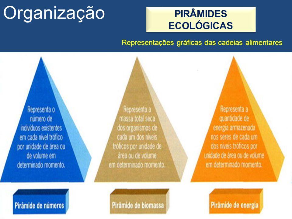 Organização PIRÂMIDES ECOLÓGICAS Representações gráficas das cadeias alimentares