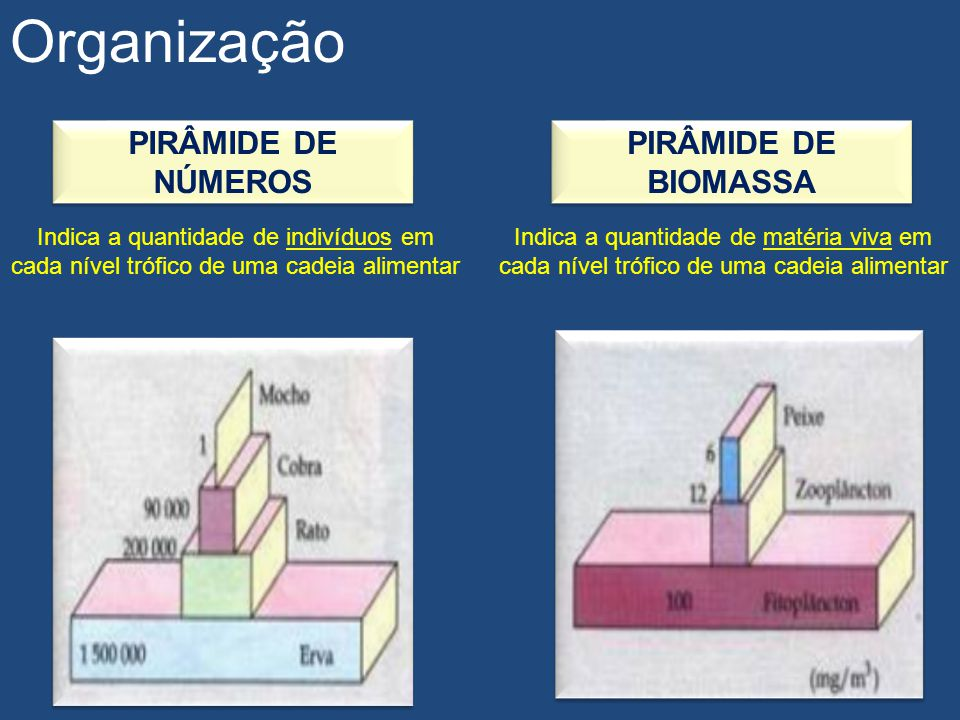 Organização PIRÂMIDE DE NÚMEROS Indica a quantidade de indivíduos em cada nível trófico de uma cadeia alimentar PIRÂMIDE DE BIOMASSA Indica a quantida