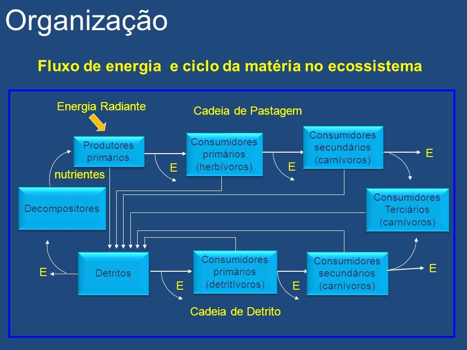 Fluxo de energia e ciclo da matéria no ecossistema Produtores primários E Consumidores primários (herbívoros) Consumidores primários (herbívoros) Ener