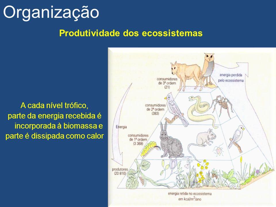 Produtividade dos ecossistemas Organização A cada nível trófico, parte da energia recebida é incorporada à biomassa e parte é dissipada como calor