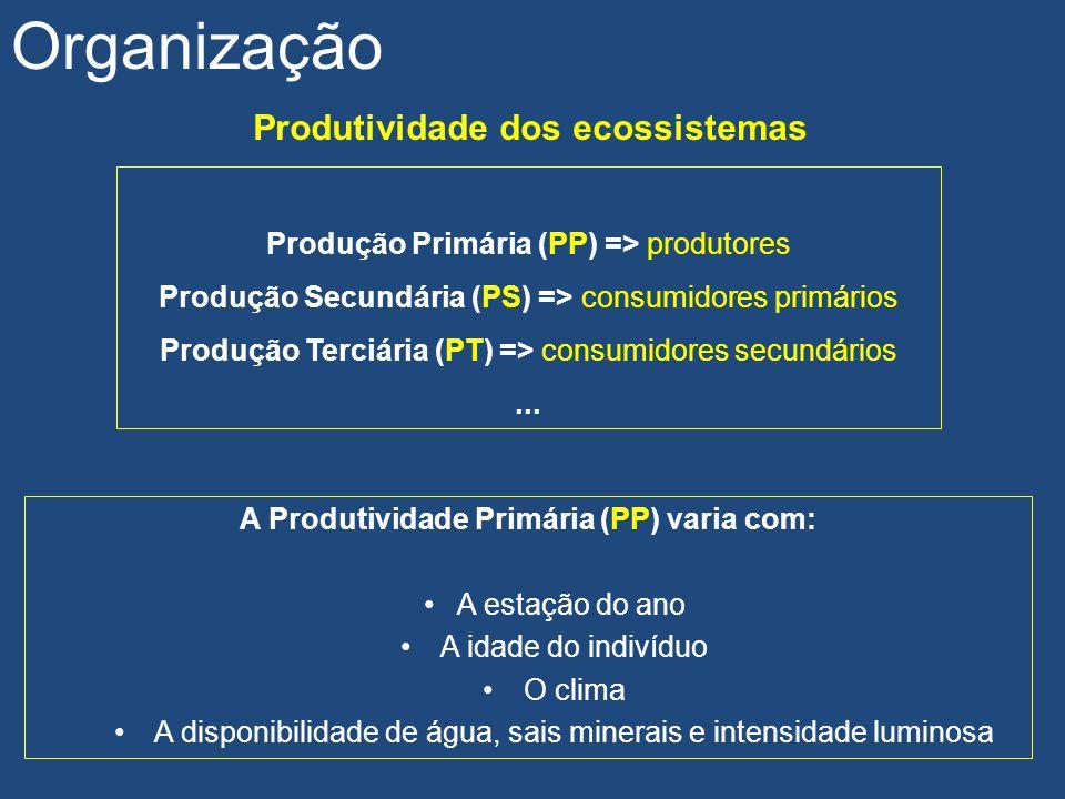 Produção Primária (PP) => produtores Produção Secundária (PS) => consumidores primários Produção Terciária (PT) => consumidores secundários... Produti