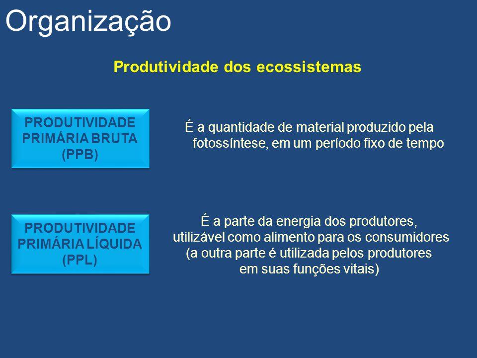 Produtividade dos ecossistemas Organização É a quantidade de material produzido pela fotossíntese, em um período fixo de tempo PRODUTIVIDADE PRIMÁRIA