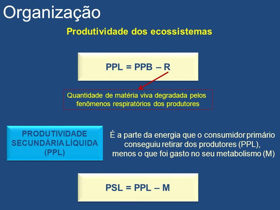 Produtividade dos ecossistemas Organização PPL = PPB – R Quantidade de matéria viva degradada pelos fenômenos respiratórios dos produtores PRODUTIVIDA