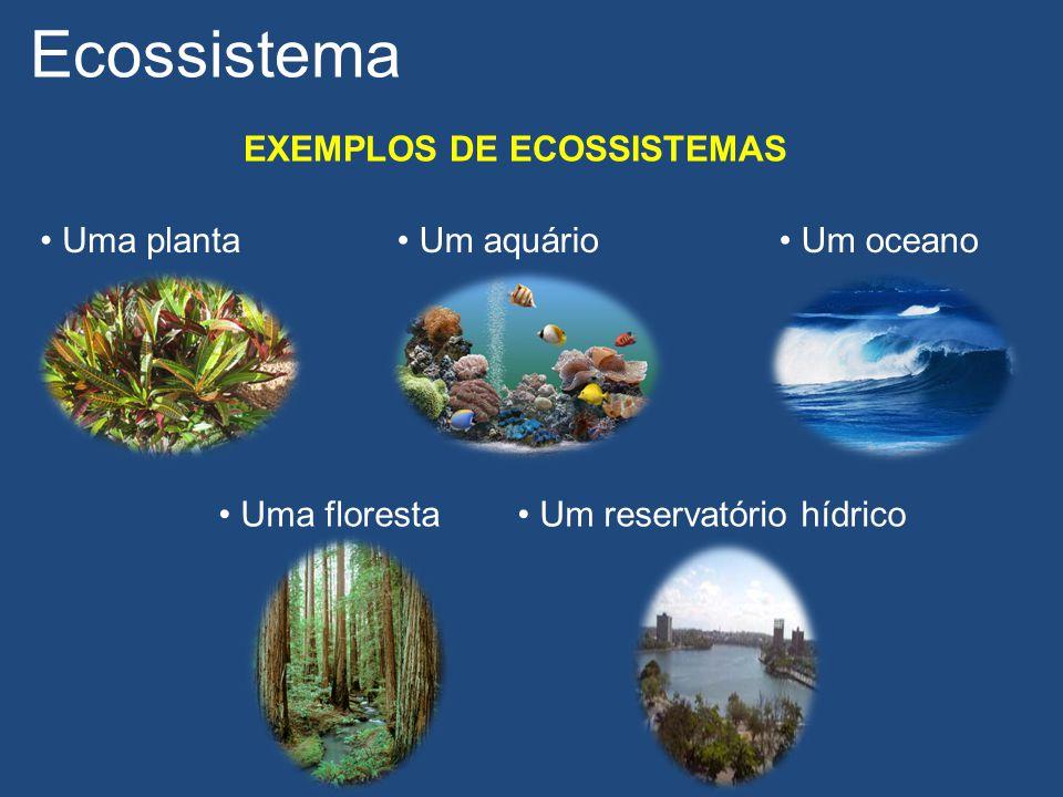 Ecossistema EXEMPLOS DE ECOSSISTEMAS Uma planta Um oceano Um aquário Uma floresta Um reservatório hídrico
