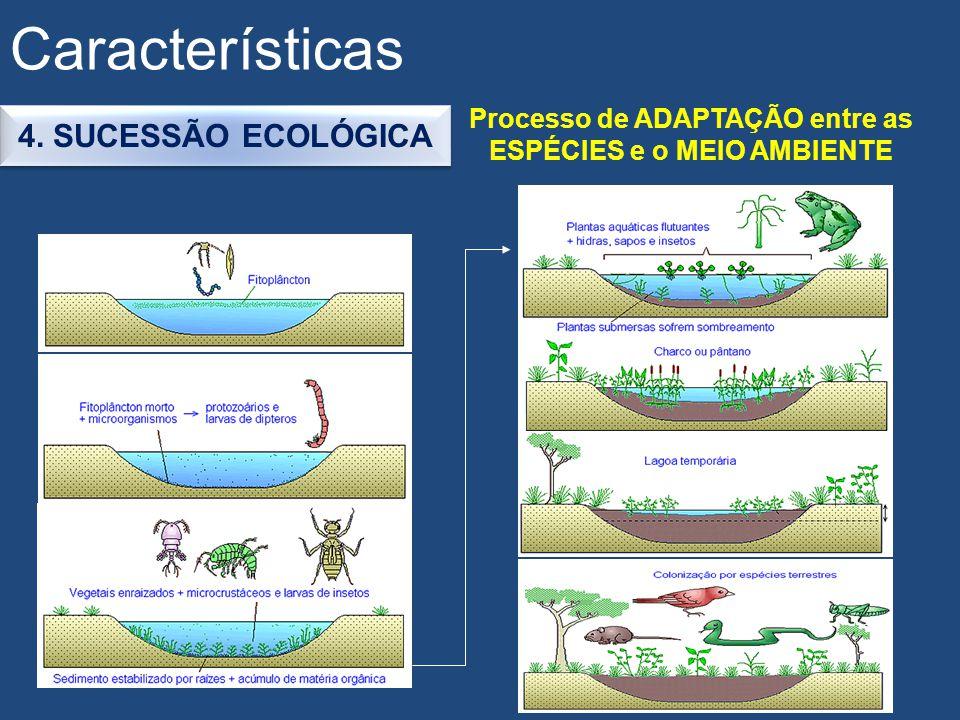 Características 4. SUCESSÃO ECOLÓGICA Processo de ADAPTAÇÃO entre as ESPÉCIES e o MEIO AMBIENTE