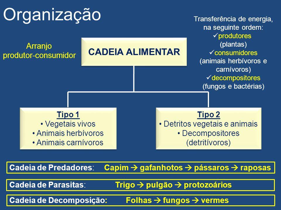 Produtividade dos ecossistemas Organização É a quantidade de material produzido pela fotossíntese, em um período fixo de tempo PRODUTIVIDADE PRIMÁRIA BRUTA (PPB) PRODUTIVIDADE PRIMÁRIA BRUTA (PPB) PRODUTIVIDADE PRIMÁRIA LÍQUIDA (PPL) PRODUTIVIDADE PRIMÁRIA LÍQUIDA (PPL) É a parte da energia dos produtores, utilizável como alimento para os consumidores (a outra parte é utilizada pelos produtores em suas funções vitais)