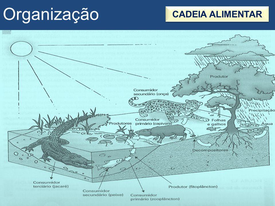 Organização TEIA ALIMENTAR Entrelaçamento de várias cadeias alimentares que interagem em um ecossistema