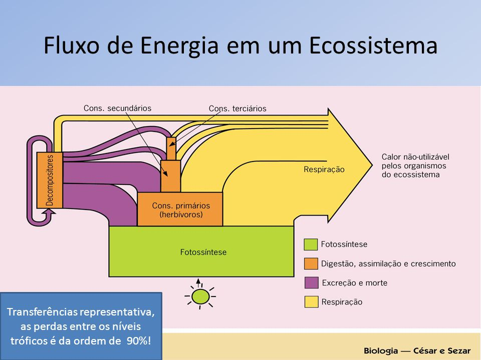 Fluxo de Energia em um Ecossistema Transferências representativa, as perdas entre os níveis tróficos é da ordem de 90%!