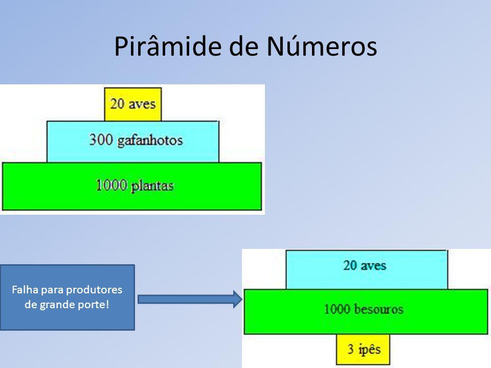 Pirâmide de Números Falha para produtores de grande porte!