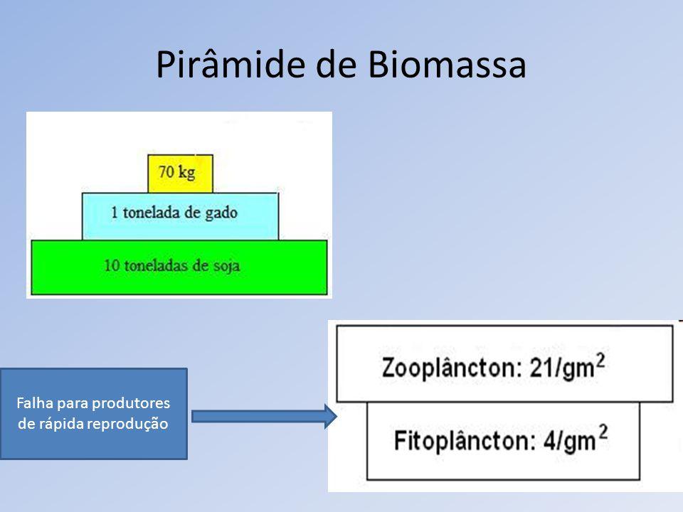 Pirâmide de Biomassa Falha para produtores de rápida reprodução