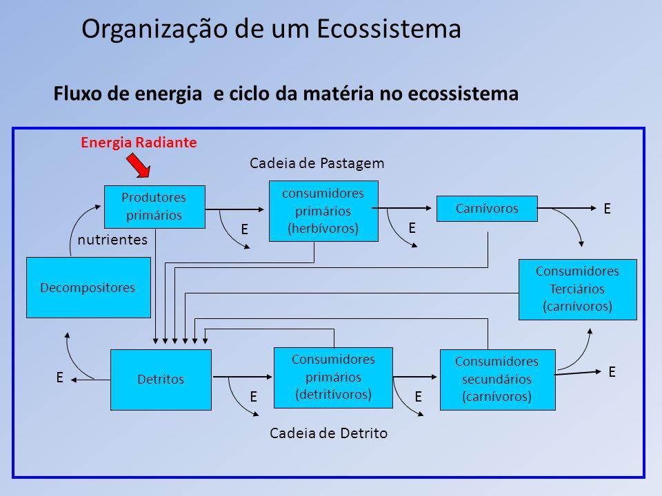 Organização de um Ecossistema Fluxo de energia e ciclo da matéria no ecossistema Produtores primários E consumidores primários (herbívoros) Energia Ra
