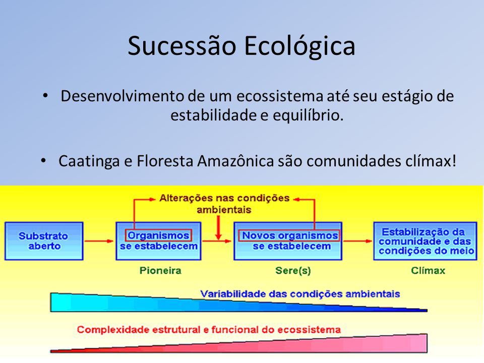 Sucessão Ecológica Desenvolvimento de um ecossistema até seu estágio de estabilidade e equilíbrio. Caatinga e Floresta Amazônica são comunidades clíma