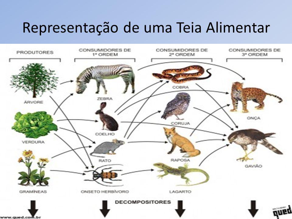 Representação de uma Sucessão Ecológica