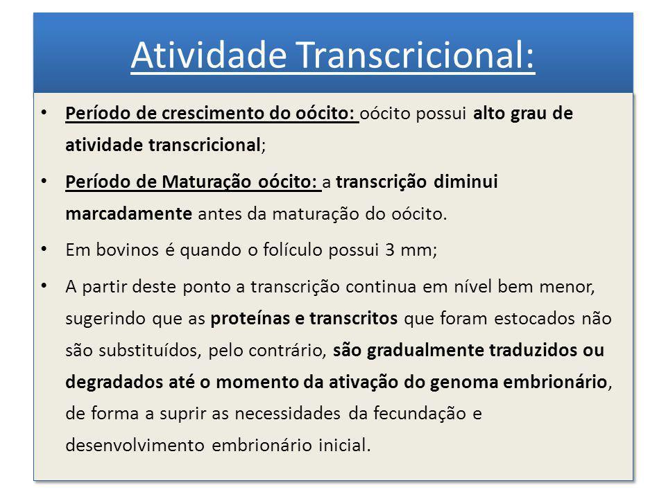 Transcrição na maturação: comparado com o oócito não maturado, após a MIV a quantidade de RNAm foi reduzida em 69% (em oócitos bovinos) Clivagem: diminuindo para 10% o nível de transcrição em embriões de 2 células.