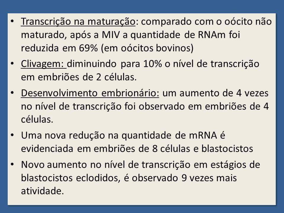 Transcrição na maturação: comparado com o oócito não maturado, após a MIV a quantidade de RNAm foi reduzida em 69% (em oócitos bovinos) Clivagem: dimi