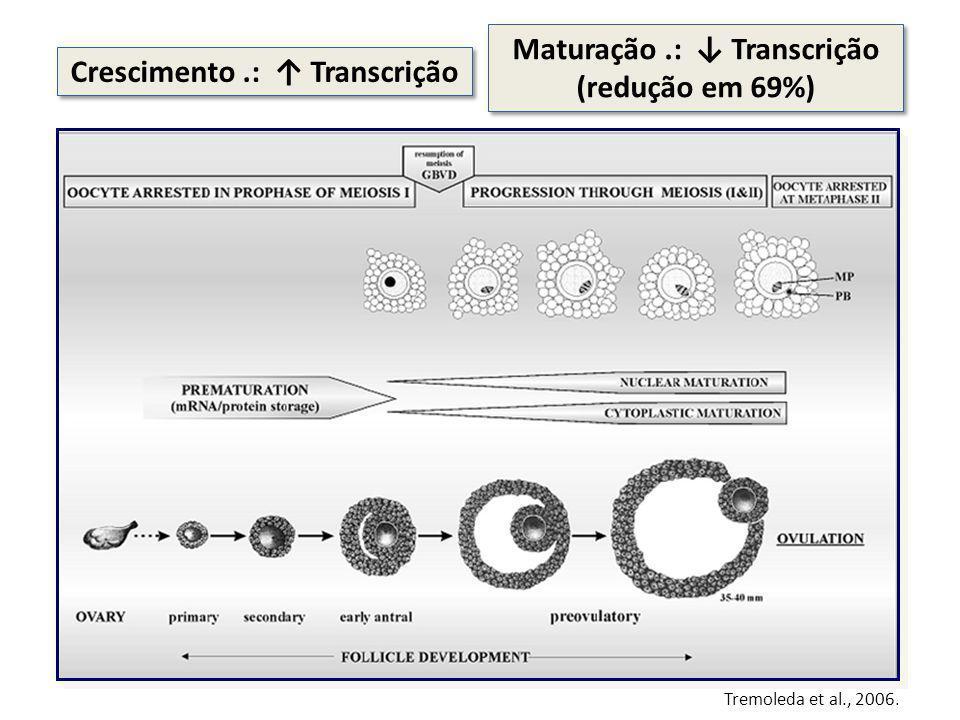 Tremoleda et al., 2006. Crescimento.: Transcrição Maturação.: Transcrição (redução em 69%)