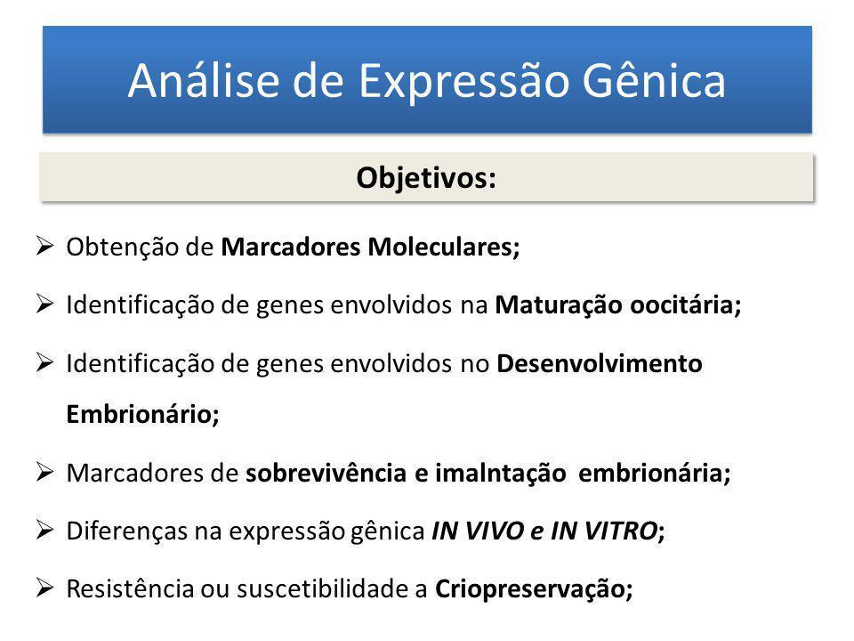 Análise de Expressão Gênica Obtenção de Marcadores Moleculares; Identificação de genes envolvidos na Maturação oocitária; Identificação de genes envol