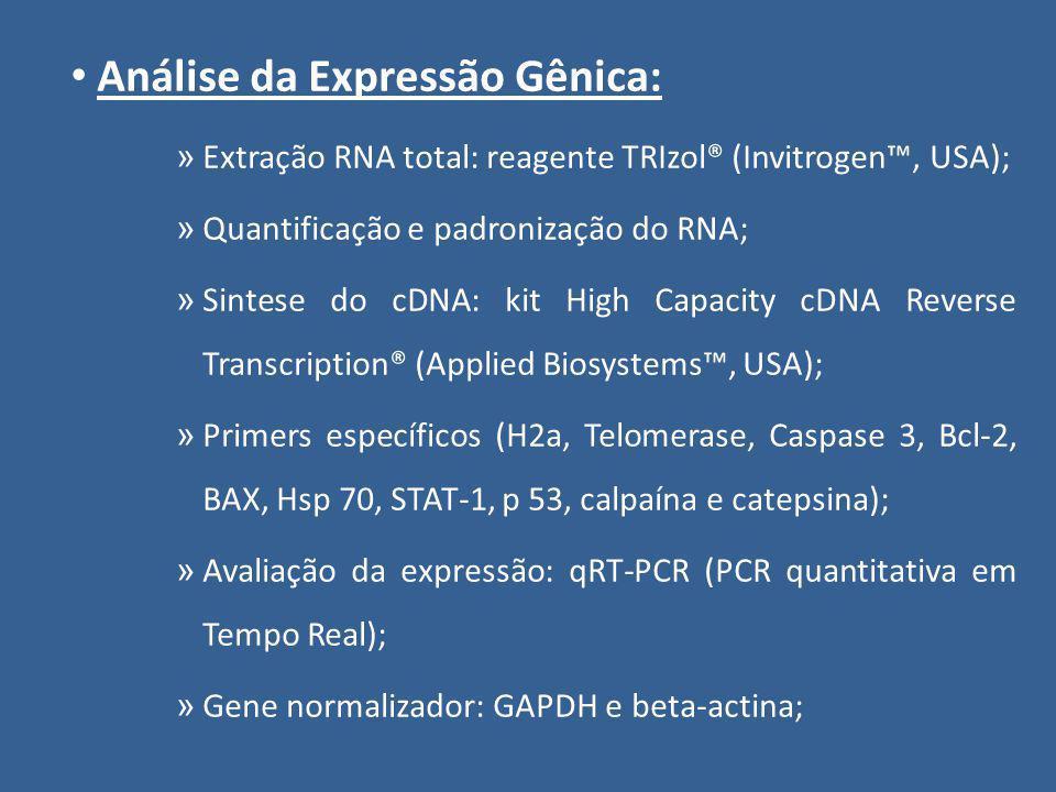 Análise da Expressão Gênica: » Extração RNA total: reagente TRIzol® (Invitrogen, USA); » Quantificação e padronização do RNA; » Sintese do cDNA: kit H