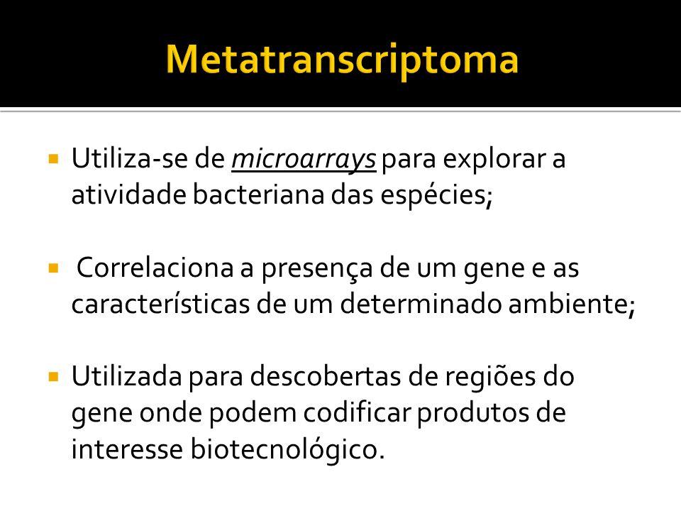 Utiliza-se de microarrays para explorar a atividade bacteriana das espécies; Correlaciona a presença de um gene e as características de um determinado