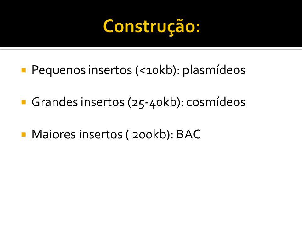Pequenos insertos (<10kb): plasmídeos Grandes insertos (25-40kb): cosmídeos Maiores insertos ( 200kb): BAC